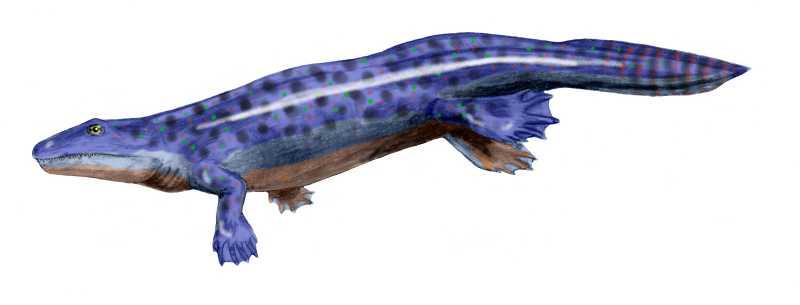 Ficha del Ichthyostega Ichthyostega